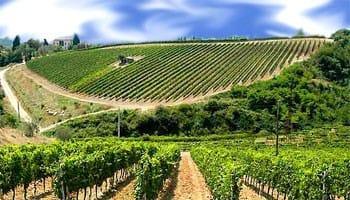 PSR Sicilia – misura 4.1: fondo perduto fino al 70% per sostenere gli investimenti nelle aziende agricole siciliane