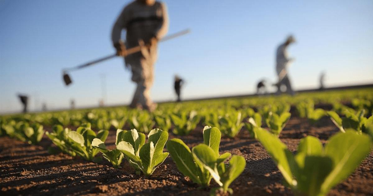 20.000 EURO DI FINANZIAMENTO A FONDO PERDUTO PER NUOVE IMPRESE IN ATTIVITA' EXTRA-AGRICOLE