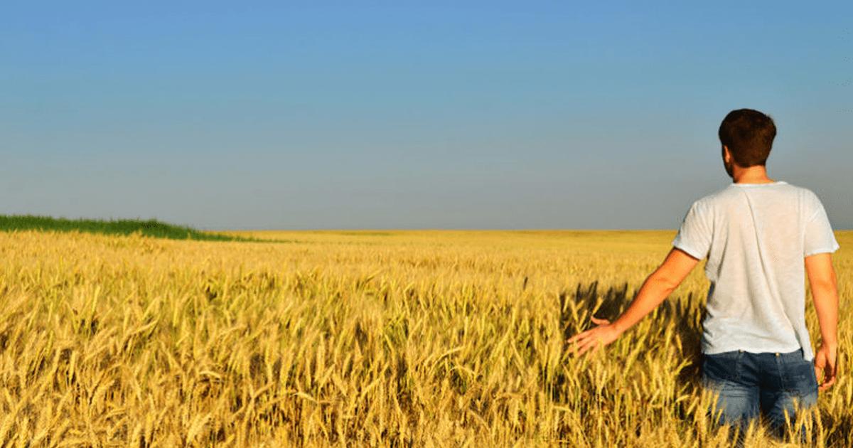 € 40.000,00 per giovani capo azienda in agricoltura